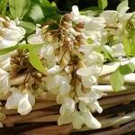 Frittelle di fiori d'acacia